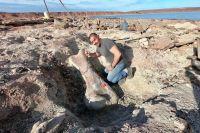 Encuentran restos de un dinosaurio de 90 millones de años por la bajante de un lago