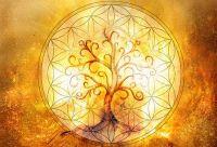 Conocé el horóscopo Celta: ¿cuál es tu signo y qué árbol te representa?