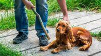 ¿Cómo y dónde denuncio maltrato animal en Roca?