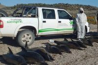 Hallaron 15 delfines muertos en la costa de San Antonio Oeste
