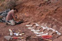Lograron extraer los restos fósiles de un dinosaurio hallados en El Chocón