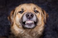Roca: Intentaron robarle pero sus perros la salvaron