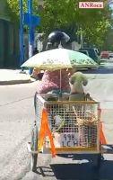 Día de paseo: Mirá la peculiar forma que tiene esta vecina de pasear a sus perritas