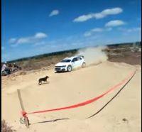 ¡Pudo ser una tragedia! Un perro se cruzó en pleno rally y el piloto lo esquivó