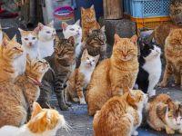 """Un censo realizado a nivel mundial determinó cuál es """"la ciudad de los gatos"""""""