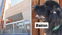 Caso Bairon: su asesino quedó imputado por actos de crueldad contra un animal