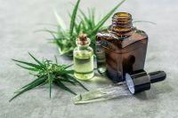 El Gobierno presentará proyecto para la industria del cannabis medicinal