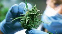 Fueron a apagar un incendio y se encontraron con más de 20 plantas de marihuana