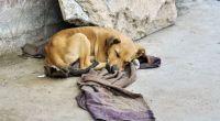 Sumá tu voto para que ayudar a que los perros de la calle ganen 1 tonelada de alimentos