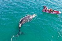 Todas las propuestas para disfrutar de la Costa Atlántica de Río Negro
